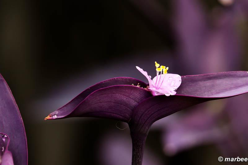 紫色の世界 それは道端にあった