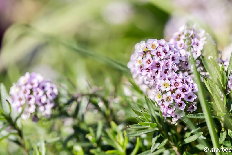 紫色の花 小さな春見つけた