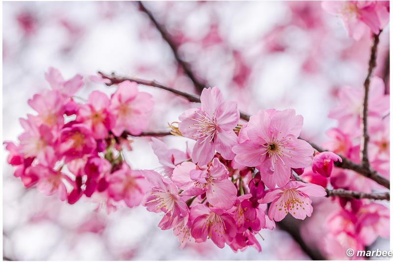 写真の中だけでも桜の気分に浸っていたい