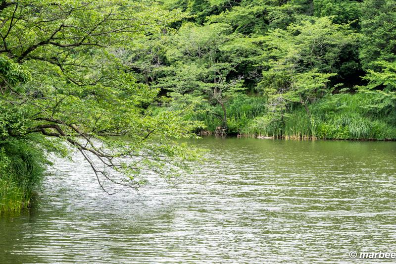 風景 緑と池