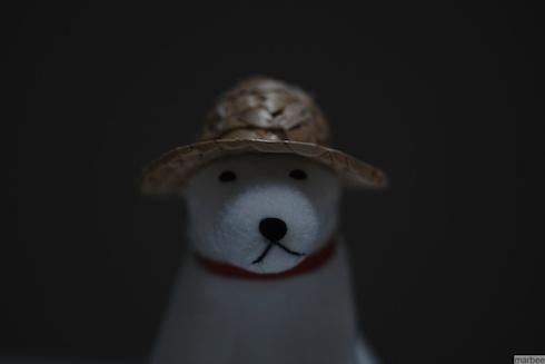 お父さん犬(室内で露出補正マイナス1)