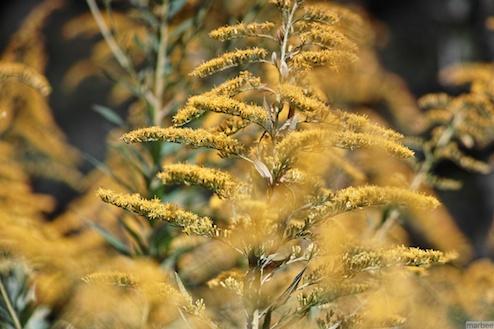 黄色い植物