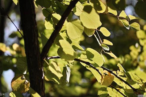 秋だけどまだ緑