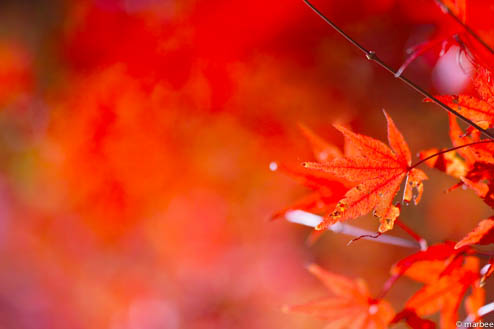 紅葉(炎ボケ)