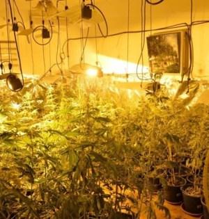Imagen de archivo de una de las plantaciones de marihuana desmanteladas por la Policía Nacional en Las Albarizas (Marbella). FOTO/ EP