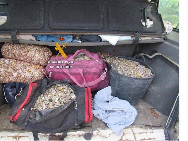 Imagen de coquinas incautadas. FOTO/ Guardia Civil