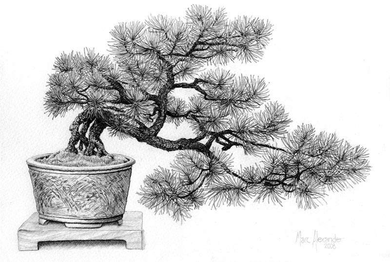Bonsai #2, Pencil on Paper, 18cm by 27cm. (2008)