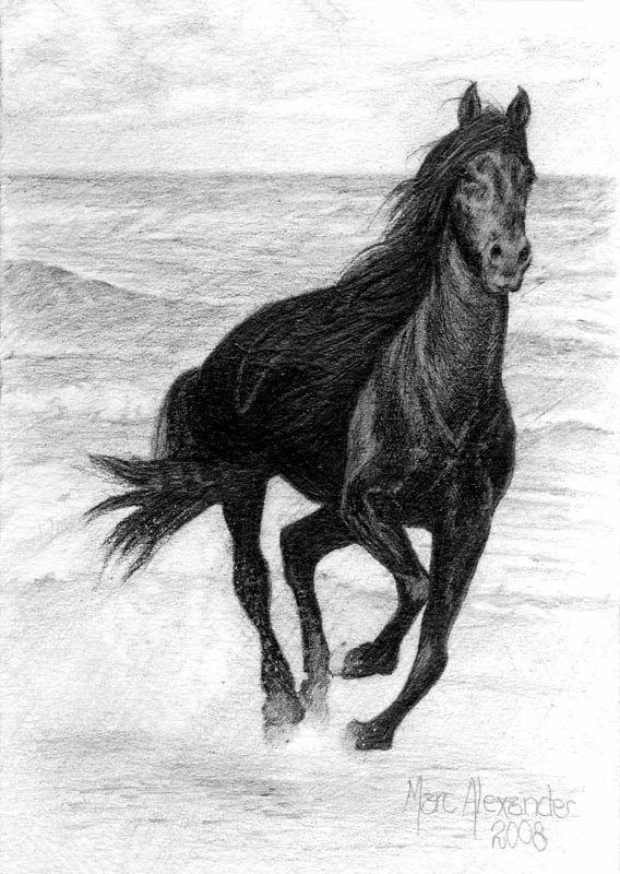 Stallion on Beach, Pencil on Paper, 15cm by 10cm. (2010)