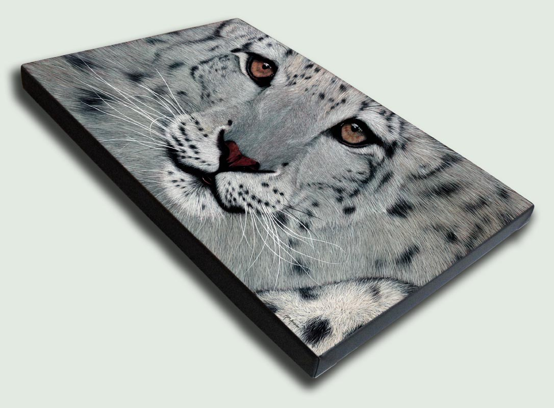 Snow Leopard Stretched Canvas