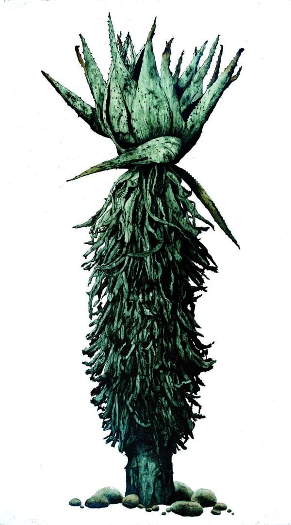 Marc Alexander | Aloe I | Flora