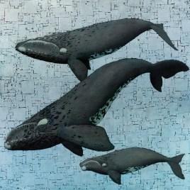 Marc Alexander | Whale Season