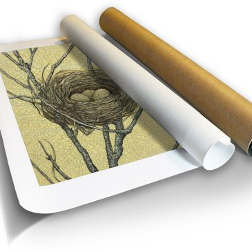 Birds Nest I – Archival Canvas Print in a Tube