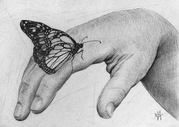 Marc Alexander | Butterfly | Touch Series