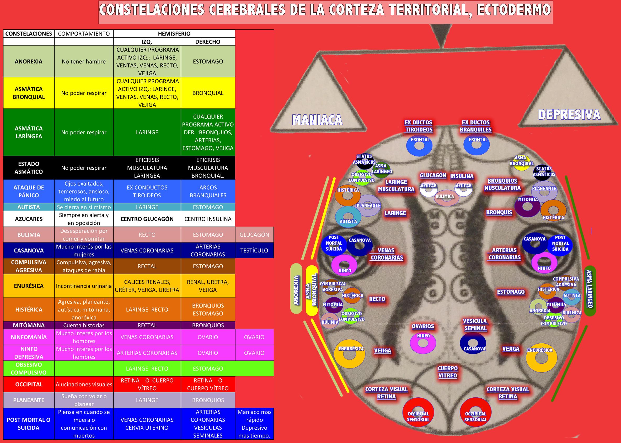 CONSTELACIONES CEREBRALES DE LA CORTEZA TERRITORIAL, ECTODERMO