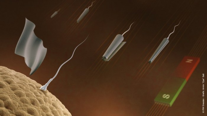 Spermbots created at IFW Dresden approach an egg, and the microtube falls away (Image: IFW...