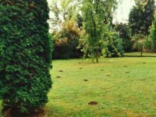 dans le jardin (texte)