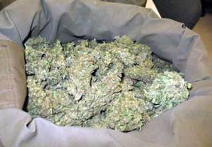 marijuana_secca