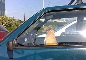 cane_abbandonato_auto
