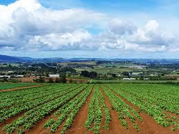 Settore Agroalimentare: boom di export per le Marche
