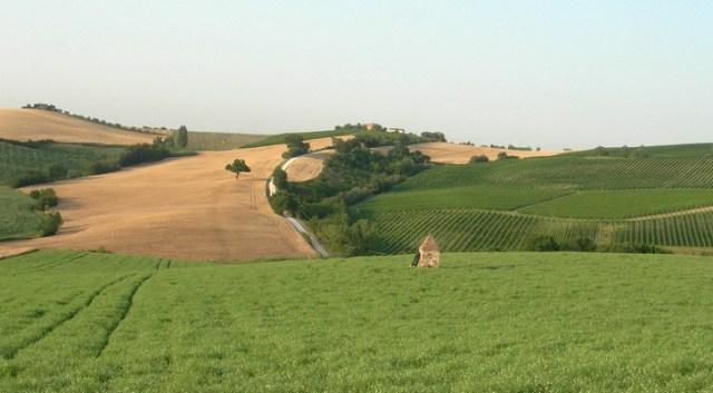 Agricoltura nelle Marche