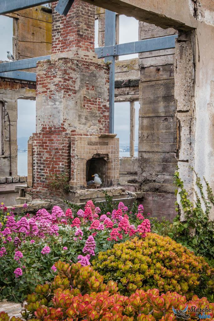 Alcatraz : entre jardin botanique et friche urbaine