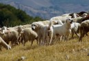 Foggia, agricoltore uccide un cane: denunciato