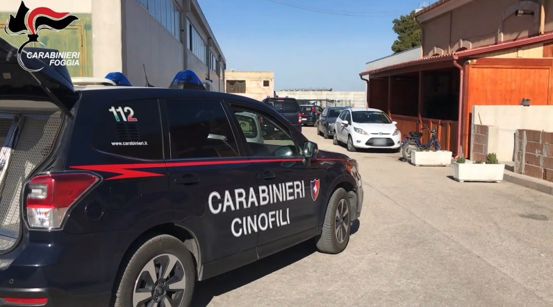 Marchiodoc - Carabinieri Cinofili