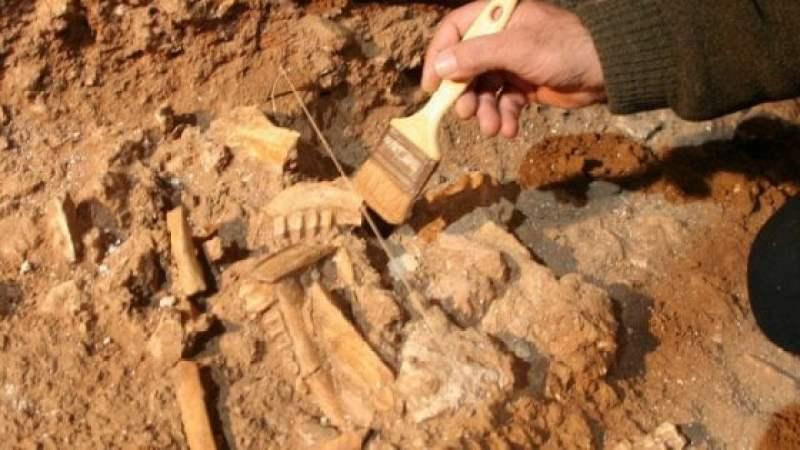 Archeologia: il più antico cane italiano scoperto in due siti in Puglia