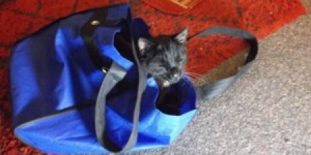 """""""I can't go shopping because my cat sits in my shopping bag."""""""
