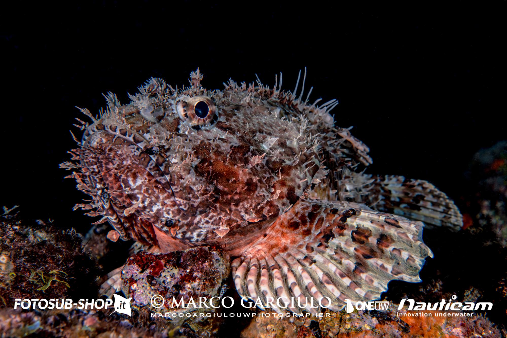 24 Marina Grande – Immersione Notturna