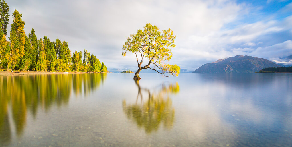 Wanaka lake, Wanaka tree, New Zealand, Wanaka, Southland, New Zealand landscape, Marco Grassi, Marco Grassi Photography,