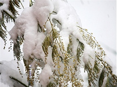 Neve a Desenzano in data 10 marzo 2010