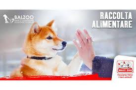 Balzoo: aiutare gli animali è facile