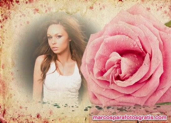 marco para fotos con flor rosa