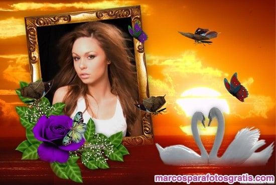 Marco de atardecer con florcitas violetas y cisnes