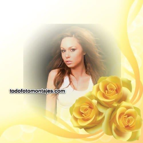 marco de fotos con 3 rosas amarillas