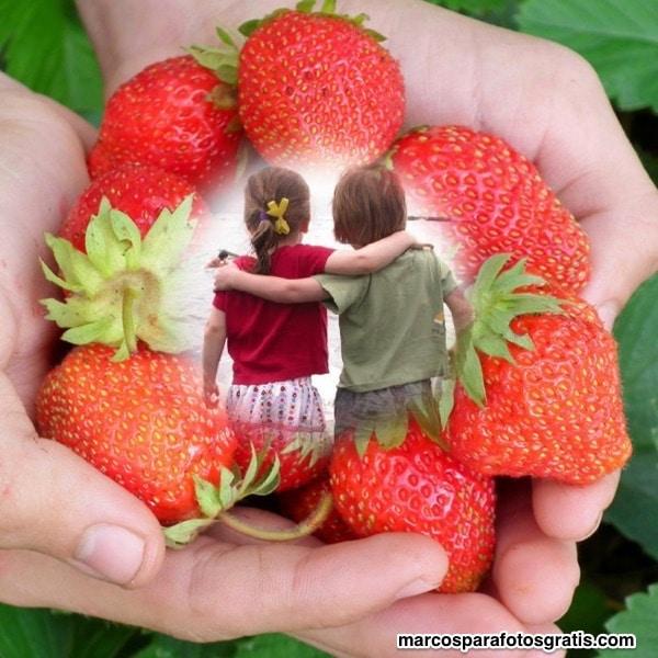 borde de fresas