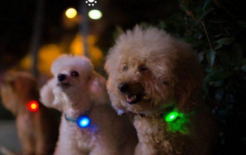 Xiaomi Mi Band para tu perro