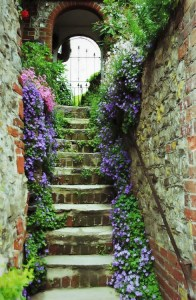 walled gardens in Somerset UK are great sheltered areas for a wide variety of annual and perennial flowering plants.