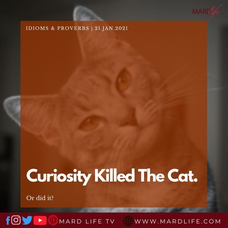 Curiosity Killed The Cat; Or Did It?