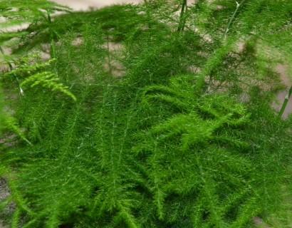 Kamerplant kopen Diverse soorten kamerplanten bij Marechal