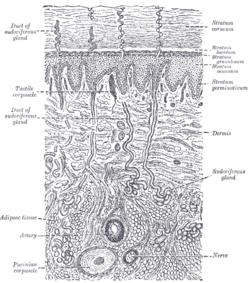 diagram of a section cell membrane chamberlain garage door sensor wiring نسيج طلائي مكعب مصفف - المعرفة