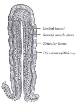 cell membrane diagram p u h volt sosnowiec نسيج طلائي عمادي بسيط - المعرفة