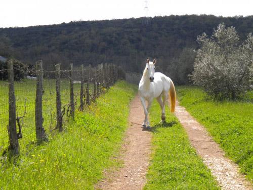 Tuscany Farm Holiday Horse Maremma Farmhouse Accommodation