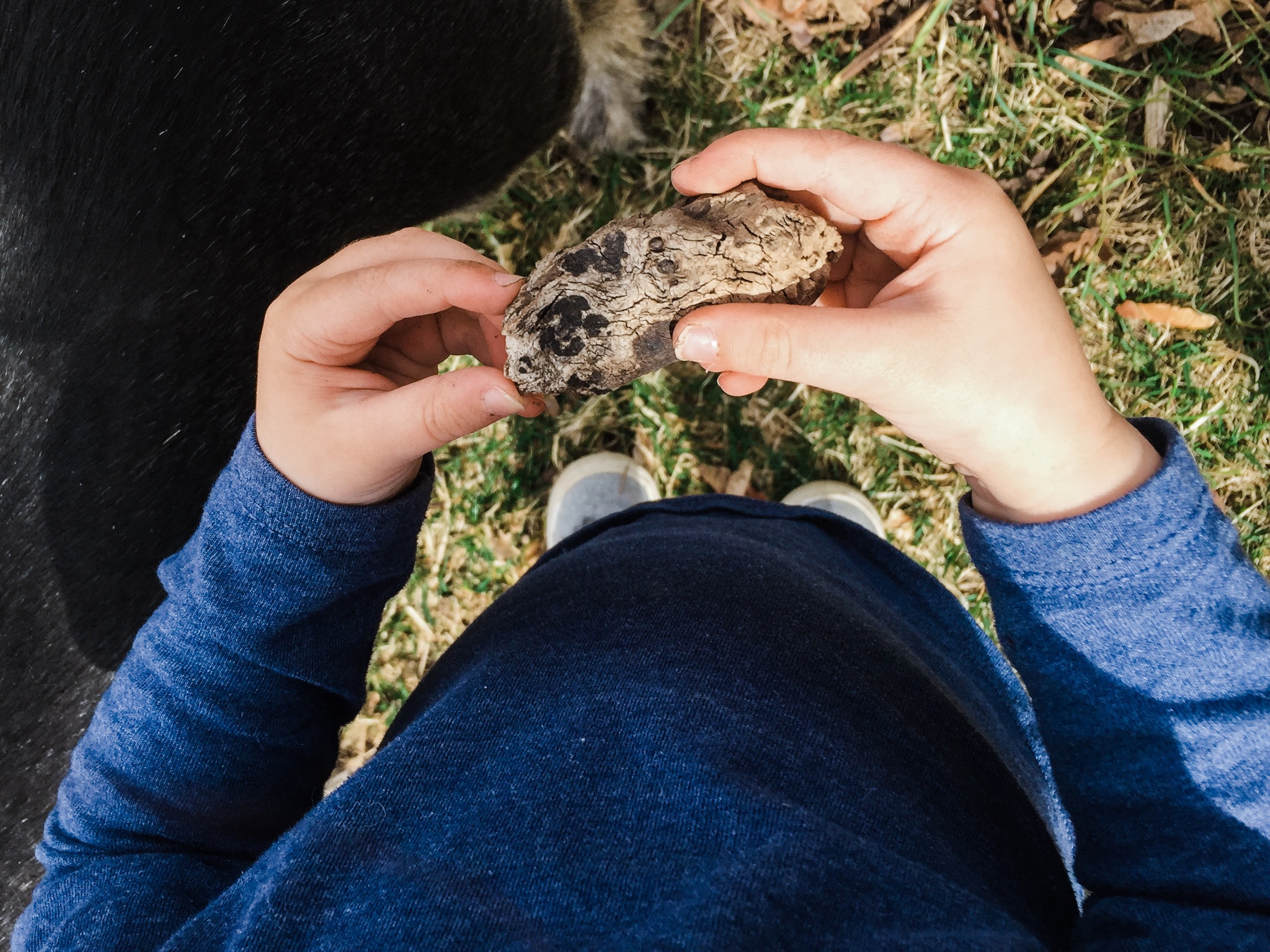 My favorite outdoor activity for toddlers is making nature collections. I'm a firm believer that kids need to be allowed to make messed and play in the dirt and this activity is perfect for encouraging that kind of adventurous play.   Arizona Photographer   Maren Elizabeth Photography