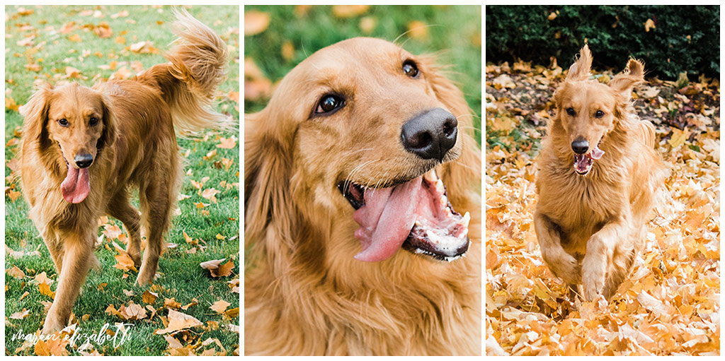 Rover Dog Sitters 2018 | Dog Photographer