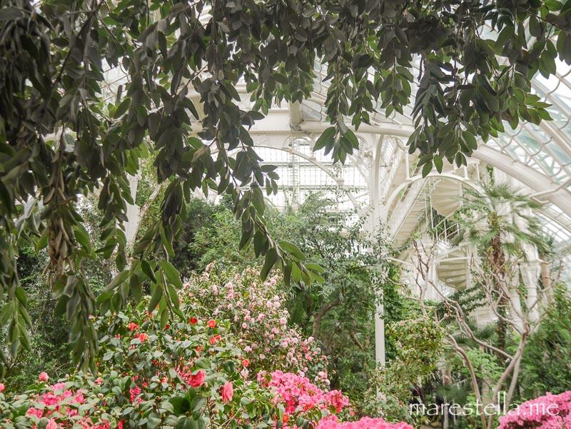 Palmenhaus_marestella (5 von 20)