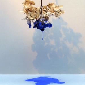 Hortensia in blue  1 ste prijs Fotoclub Twente