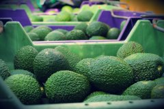 Avocados from The Berry Farm