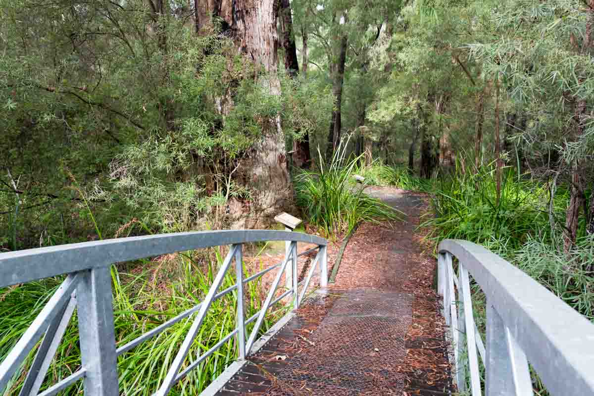 Bridge on Ten Mile Brook Trail. 5 southern towns in the Margaret River Region.